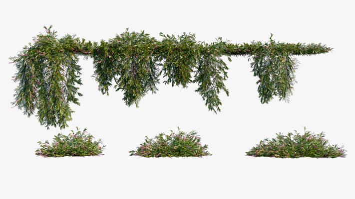现代植物墙 绿植 藤蔓
