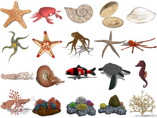 现代海洋生物 贝壳 海螺