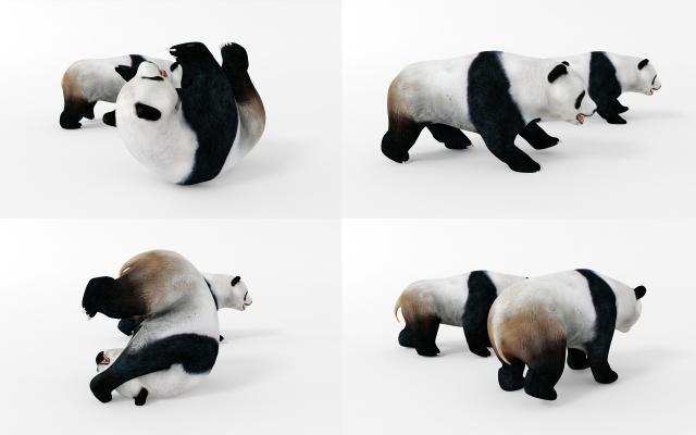 现代动物 熊猫 熊猫动画