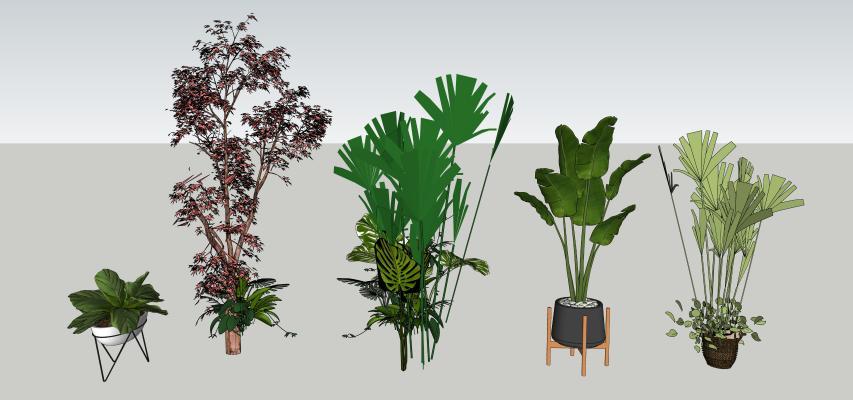 现代盆栽 装饰植物