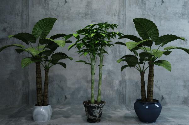 现代盆栽花卉
