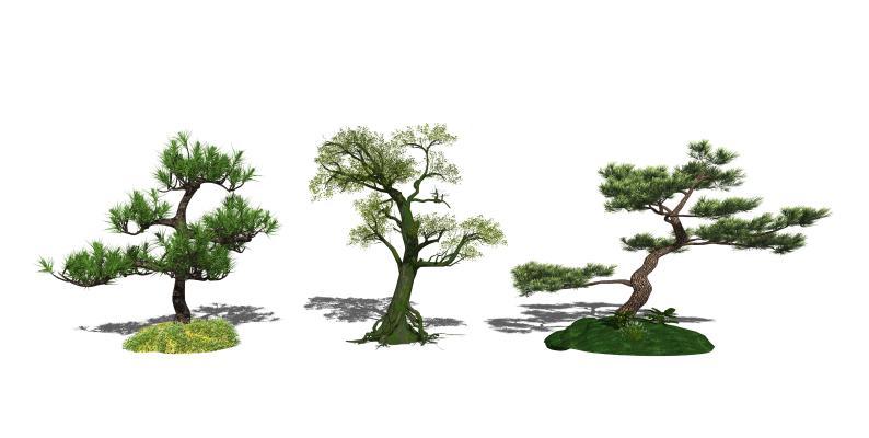 新中式景观树 树木 榕树