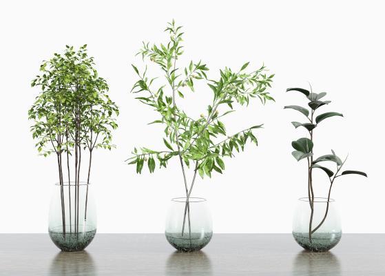 现代花卉绿植 玻璃花瓶