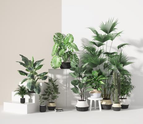 现代盆栽 植物 绿植
