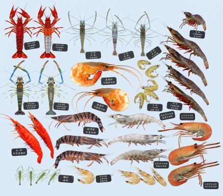 现代河虾 海鲜 龙虾