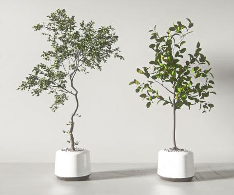 �F代盆栽 盆景 植物�M合