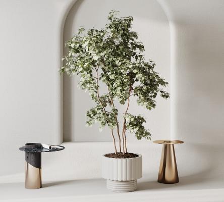 现代植物 盆栽 摆件