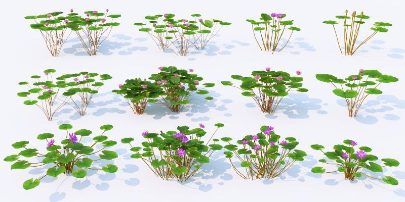 水生植物 荷叶 荷花