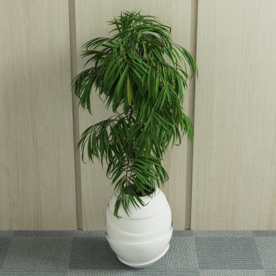 现代绿植 盆栽 植物
