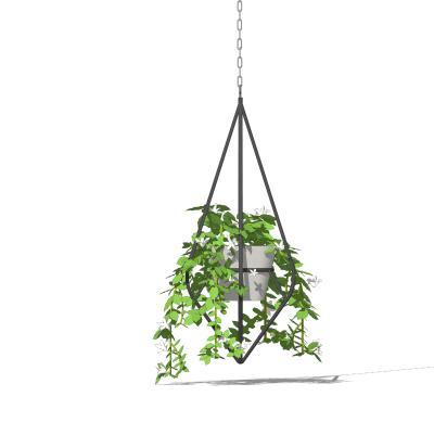 现代吊挂植物 绿植 吊篮盆栽