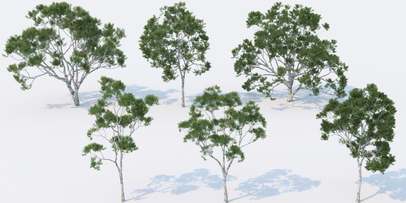 现代树木 风景树 景观树