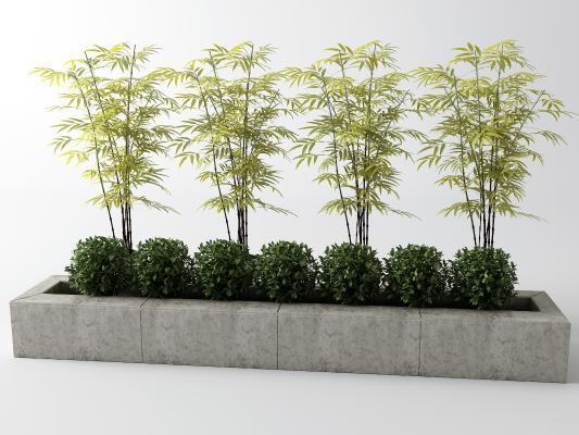 新中式竹子 灌木