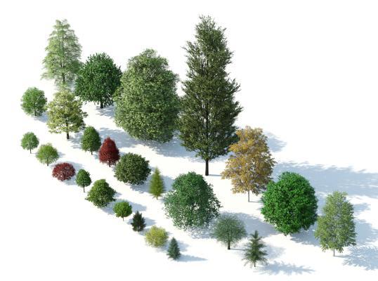 现代树木 树木组合 园林景观树