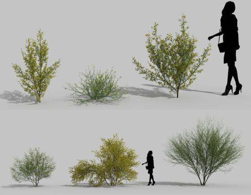 现代花草 花坛 景观树