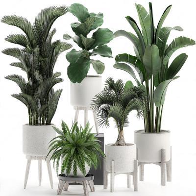 �F代盆栽※植物