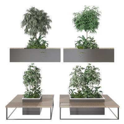 现代盆栽盆景 植物 绿植