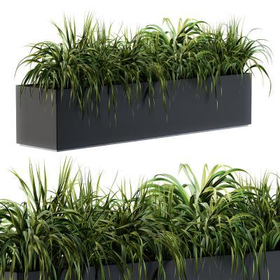 现代盆栽 植物池