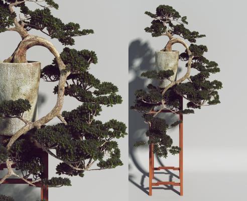 新中式松柏盆景