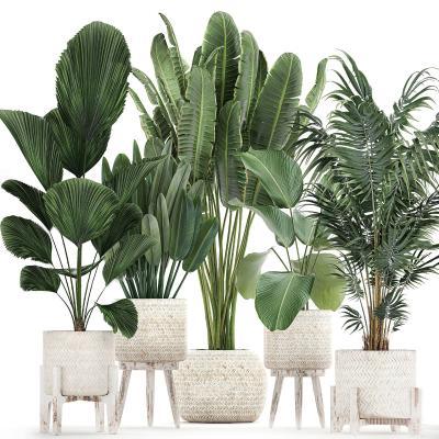 現代綠植盆栽