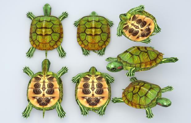 现代乌龟 巴西龟