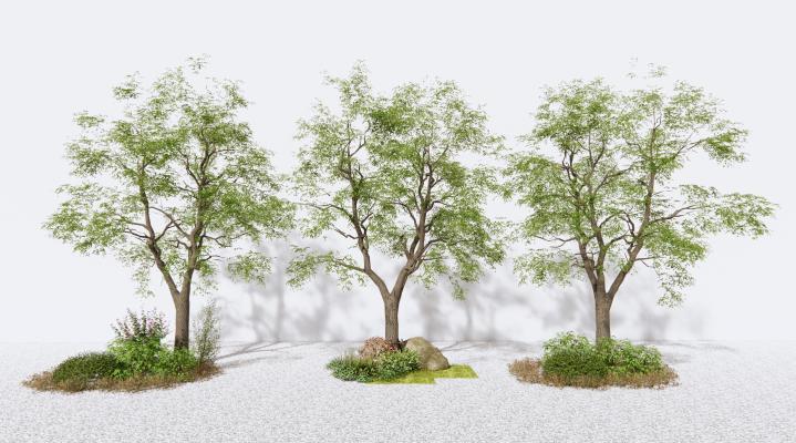 现代景观树 树木 草