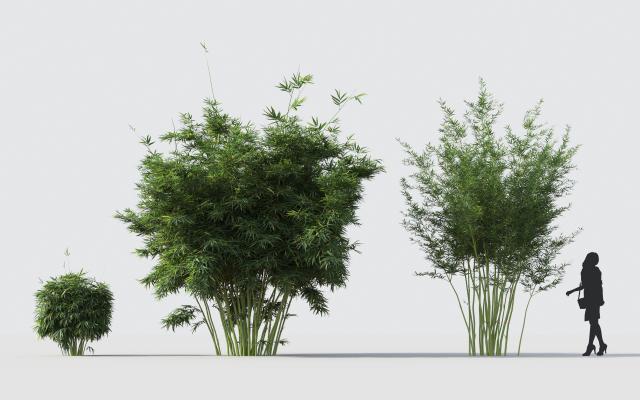 现代竹子 植物 花卉