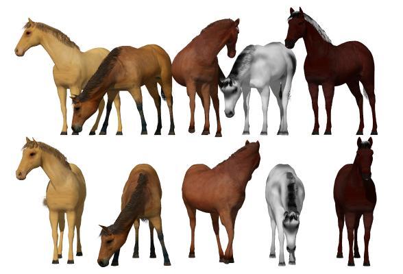 现代骏马 马匹组合 动物