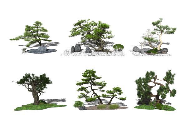 新中式庭院景观小品 景观树 松树