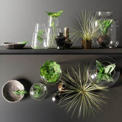 现代植物盆栽 绿植 摆件