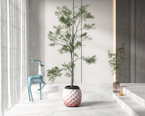 �F代盆栽 盆景 植物