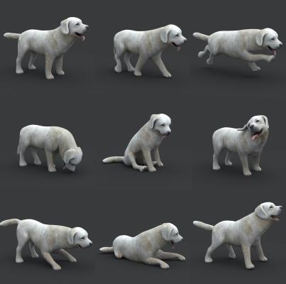 现代动物 狗