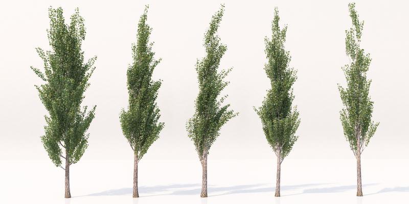 现代景观树 风景树 园林树