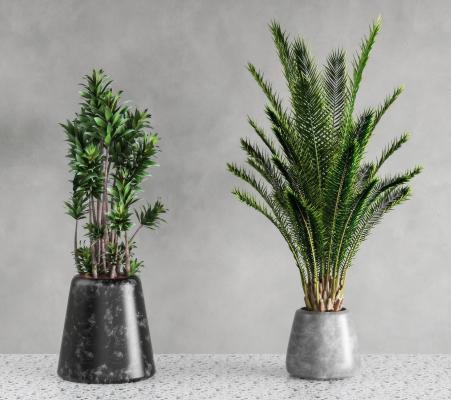 现代绿植盆栽