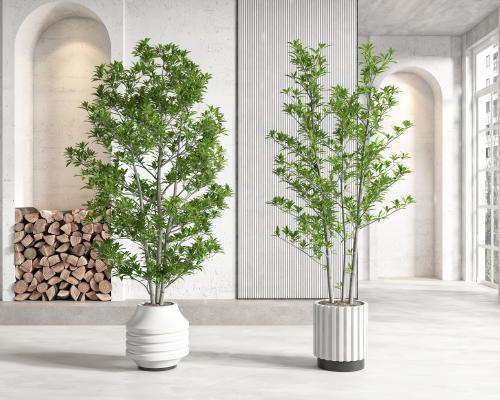 現代盆栽盆景 植物組合