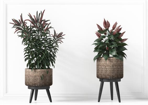 现代花瓶花艺,现代花盆,现代绿植,现代花卉,阳台植物