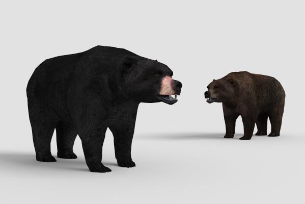 �F代黑熊