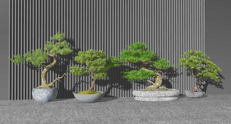 新中式松树盆栽 盆景 绿植