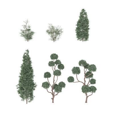现代灌木树木