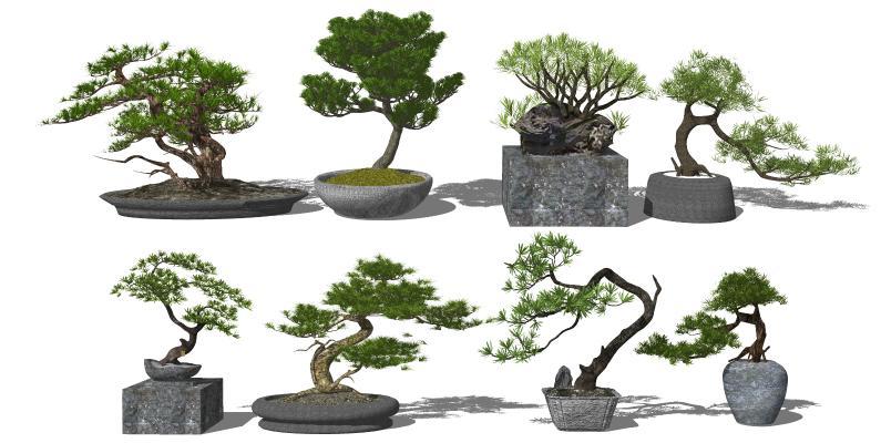 新中式松树植物盆栽 迎客松 景观松树