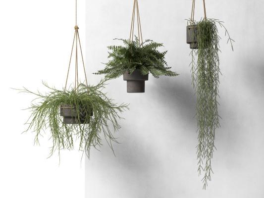 现代吊篮 绿植盆栽