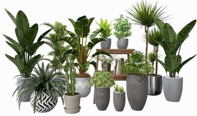 現代綠植 盆景盆栽組合