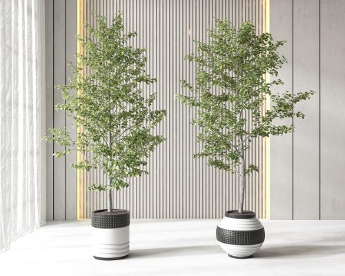 现代盆栽 盆景 植物