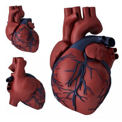 现代心脏 心脏 医疗器材