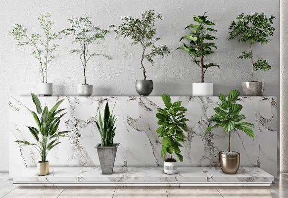 现代盆栽 绿植 树