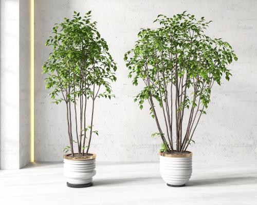 現代盆栽 盆景 植物