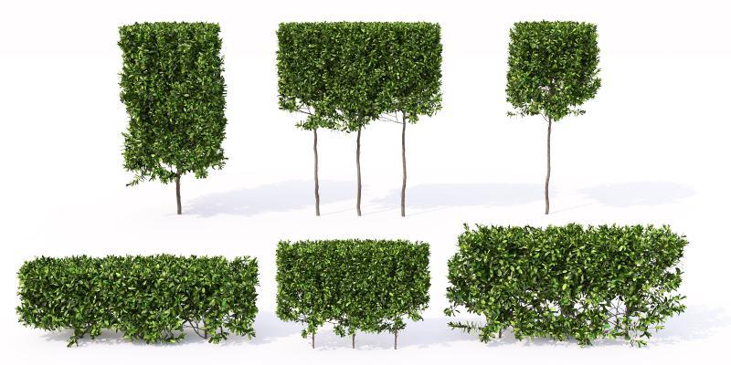 灌木 树木 绿篱