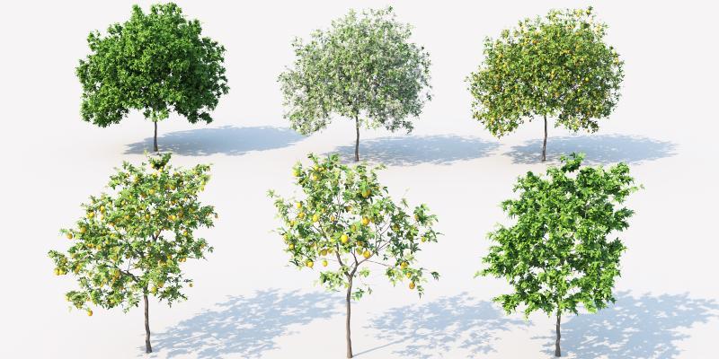 现代景观树 行道树 室外植物
