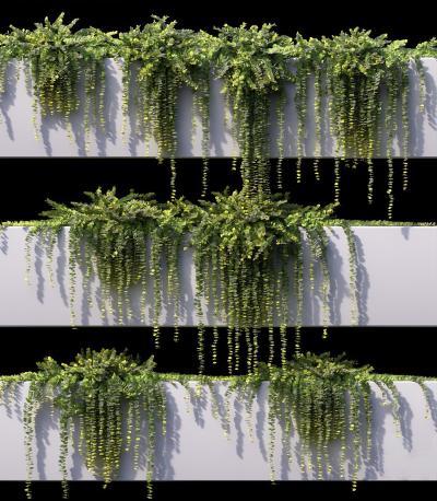 現代綠植 盆栽