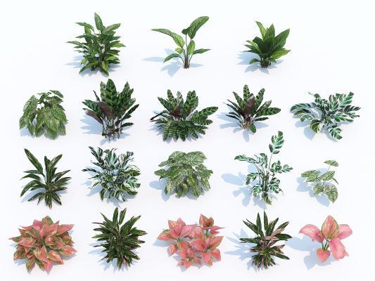 现代花草花卉 景观 绿植