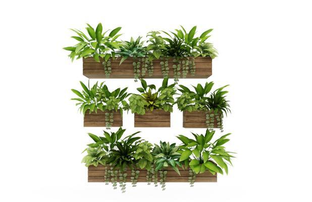 现代盆栽 植物 干枝